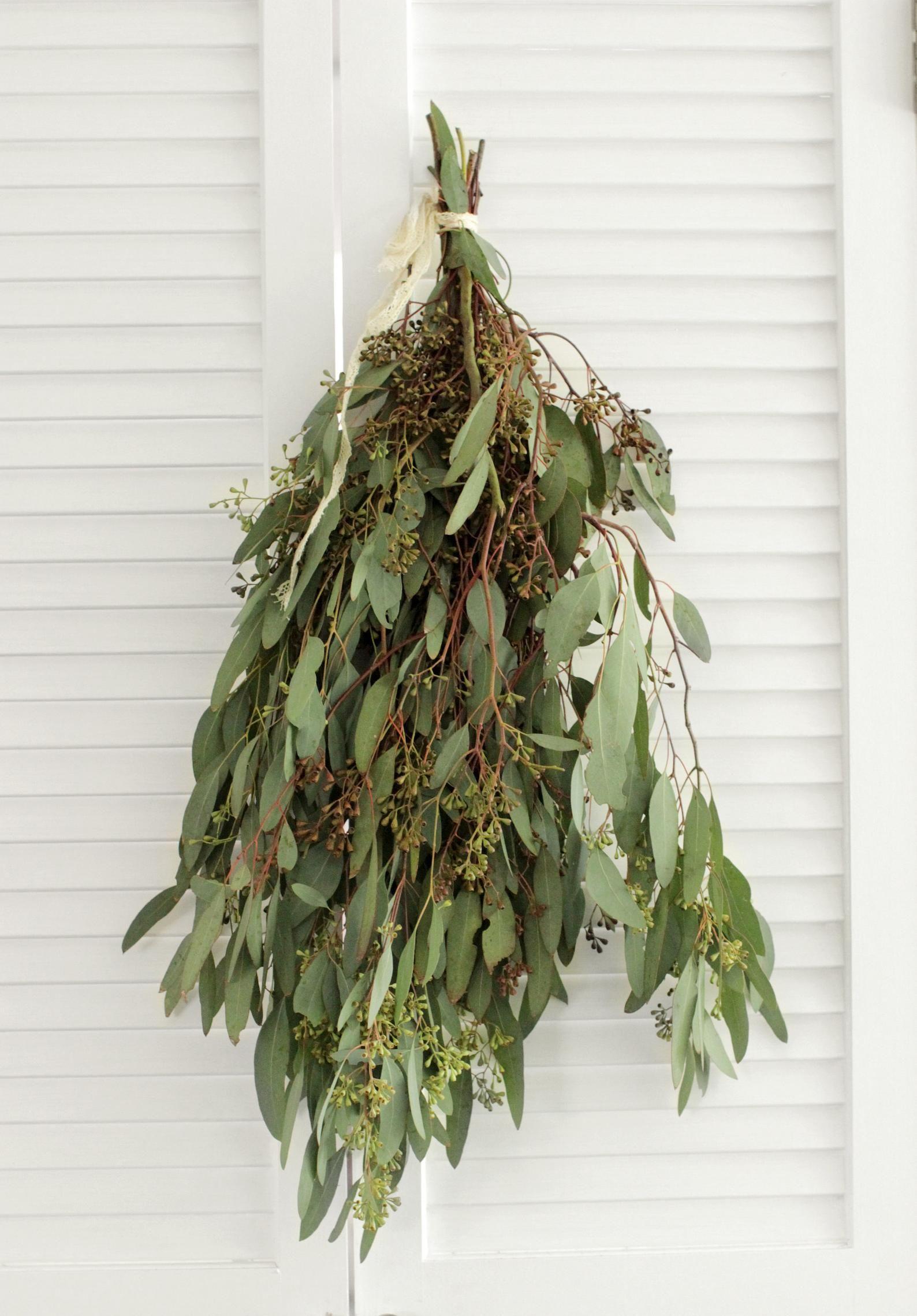 Fresh seeded eucalyptus bunch 57 stem free shipping