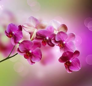 Wandtattoo Orchidee Pflanze