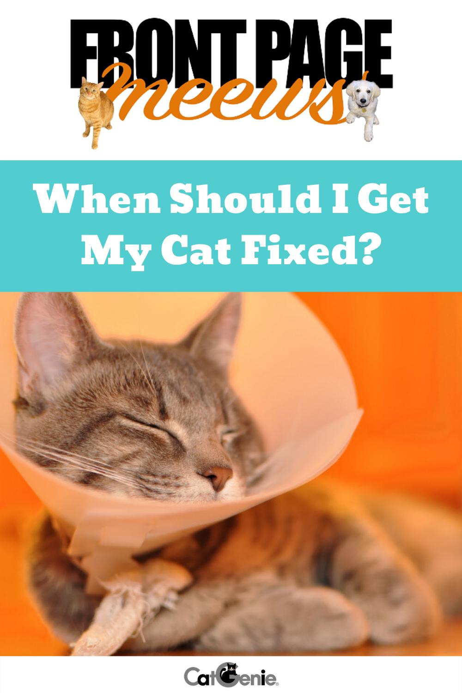 When Should I Get My Cat Fixed Cats Cat Health Tiny Kitten