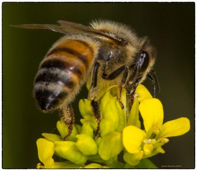 Begin Beekeeping - honey bees #beekeeping #bees #honeybees ...