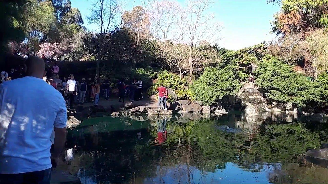 Cherry Blossom Festival Japanese Garden In Sydney Japanese Garden Garden Bonsai Tree Cherry Blossom Festival