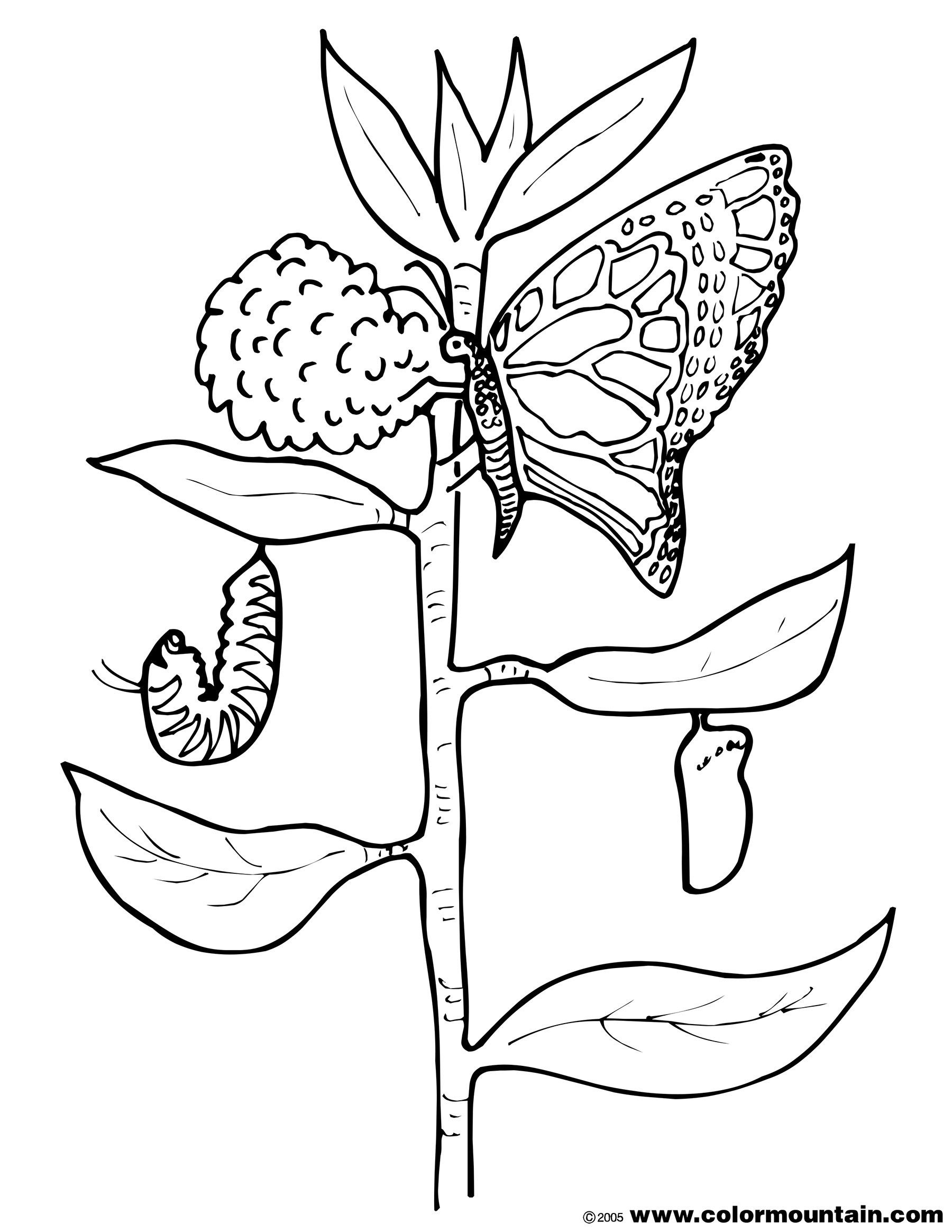 Butterfly Egg Coloring Page Youngandtae Com Butterfly Coloring Page Ladybug Coloring Page Coloring Pages [ 2329 x 1800 Pixel ]