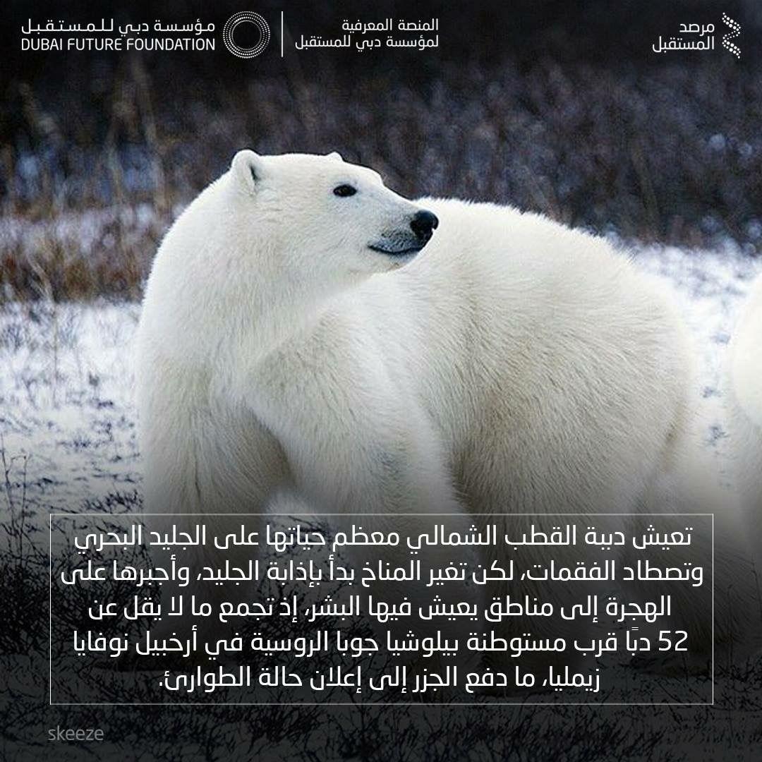 دببة قطبية ترهب بلدة روسية بسبب تغير المناخ Polar Bear Bear