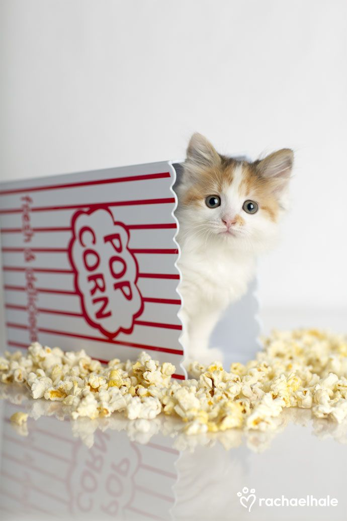 Kandi (Domestic Short-hair) - Kandi pops out for pop corn.  (pic by Rachael Hale)