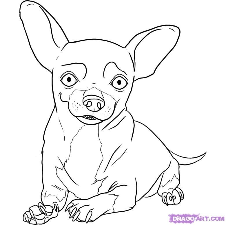 How To Draw A Chihuahua By Dawn Dog Coloring Page Chihuahua