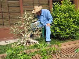 Image result for bonsai garden