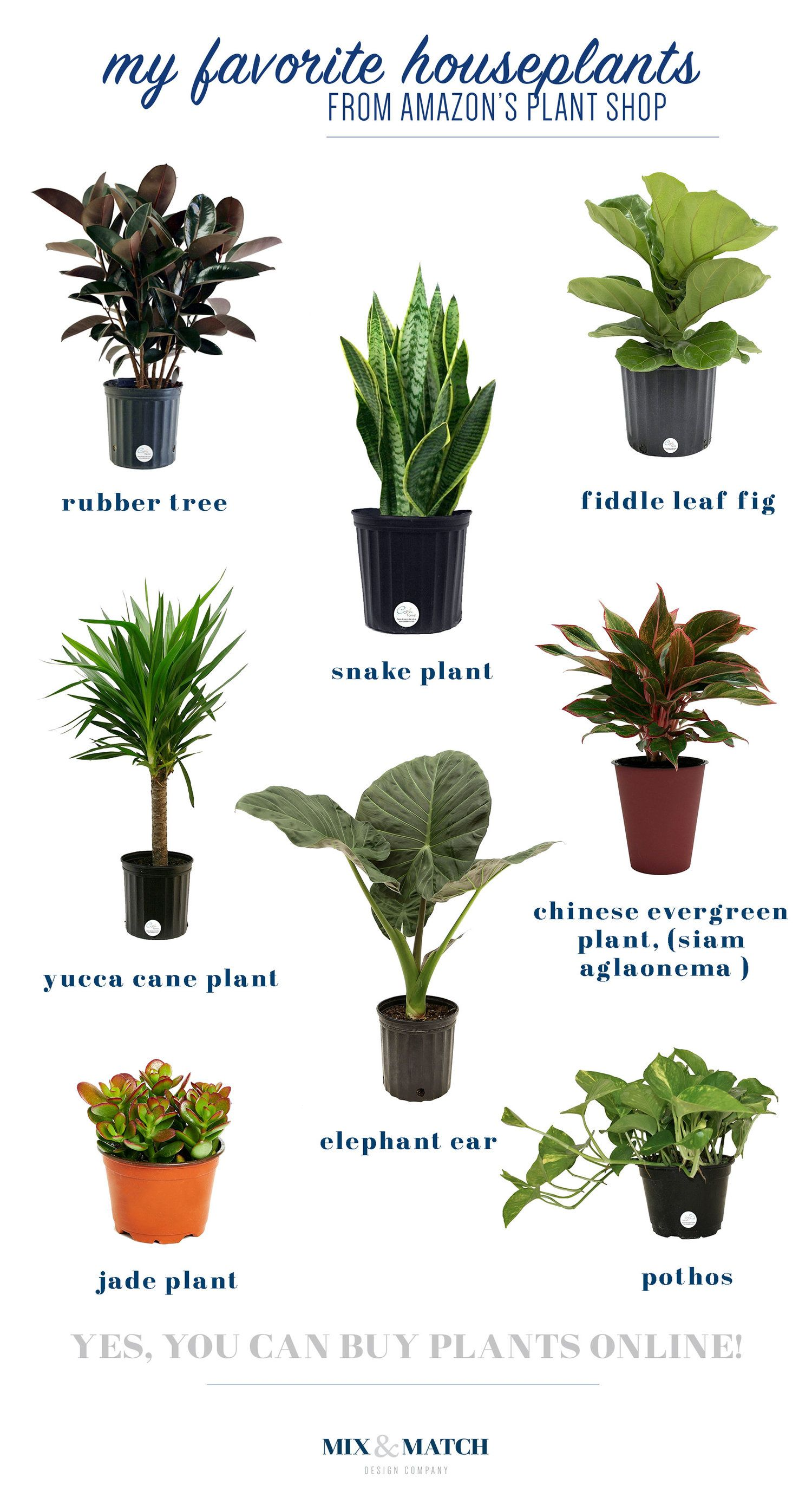 Did You Know You Can Buy Live Plants On Amazon Plus Some