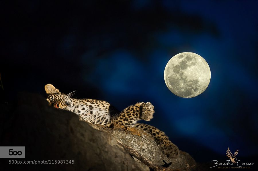 By the light of the Moon by BrendonCremer