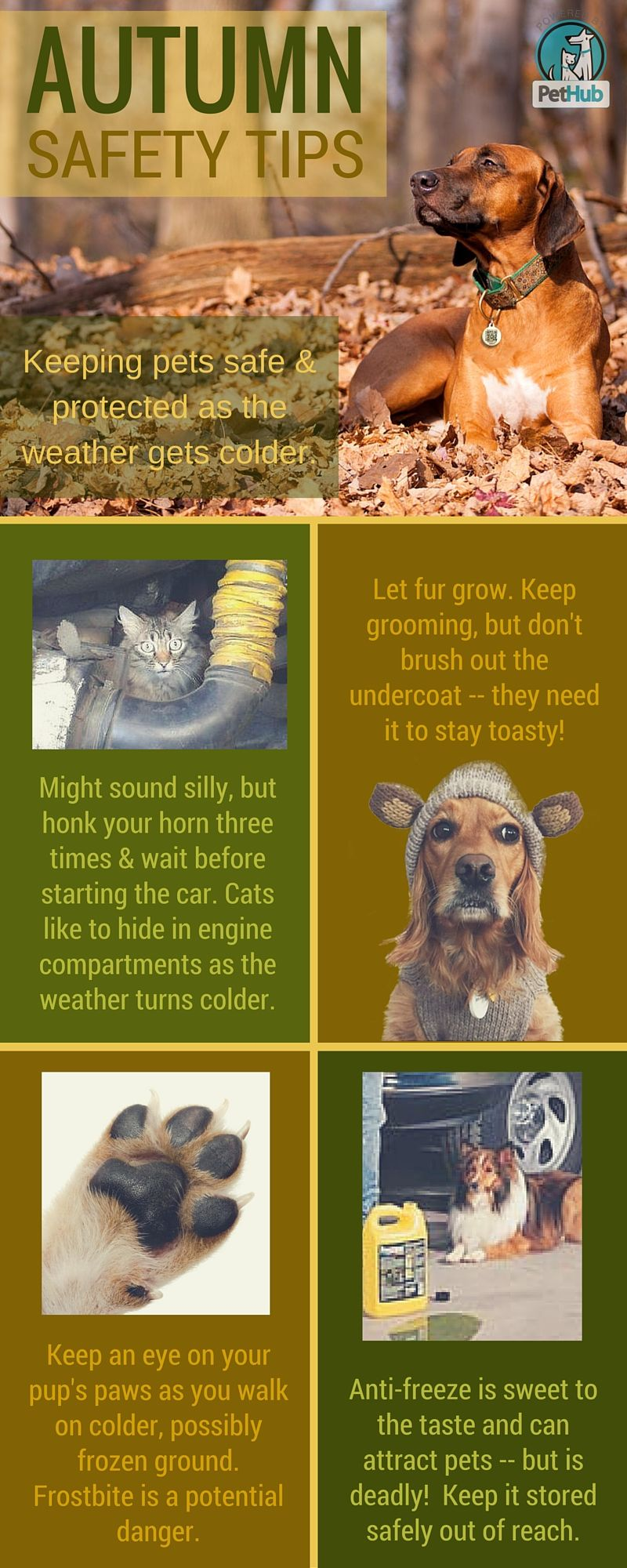 4 Critical Pet Safety Things To Remember As Summer Turns To Autumn