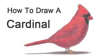 How To Draw A Toucan Keel Billed Youtube Bird Drawings Birds Painting Cardinal Painting