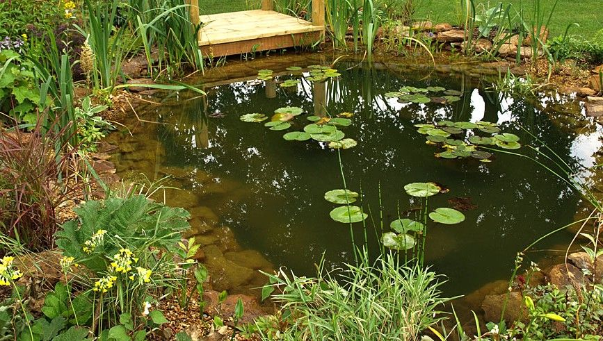 Like the overhang for grow bed waterfall spout for return for Types of pond design