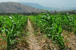 i am trying to prepare an assignment on major crops of horticulture