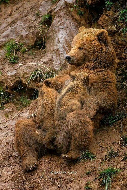 Mama bear's hugs
