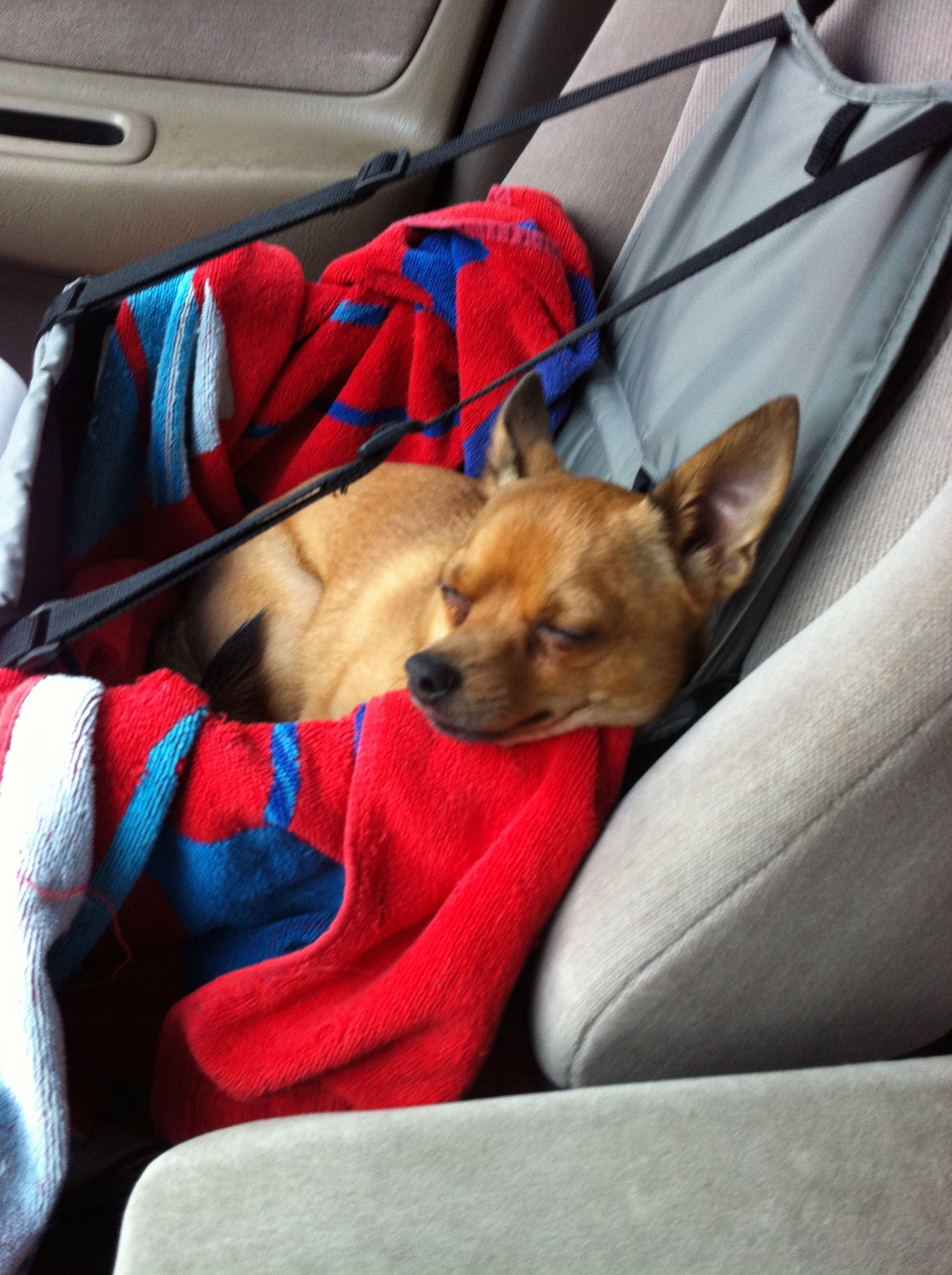 #ridecolorfully with your best friend sleeping in the passenger seat.