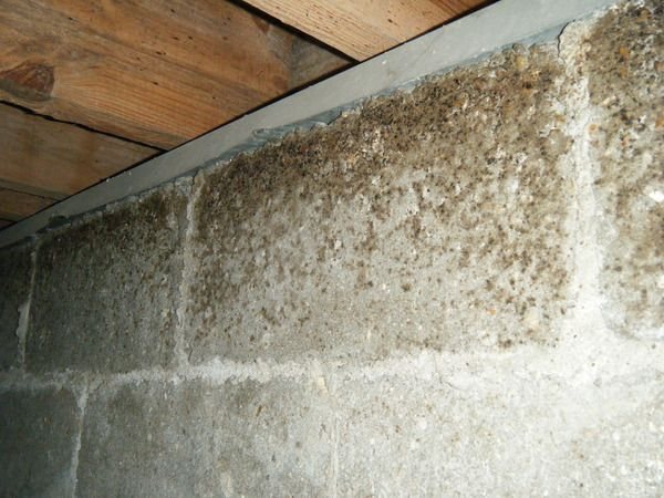 Here S A Close Up Of The Mold And Mildew Growth In The Block Wall Mold Mildew And Other Bacteria Are Nature Crawl Space Repair Mold Remediation Crawlspace