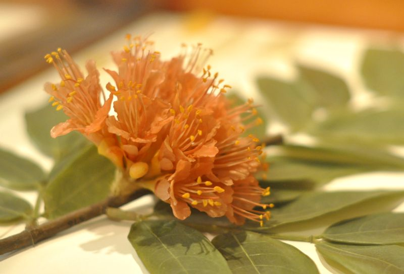 Image result for Glass Flowers at the Harvard Museum of Natural