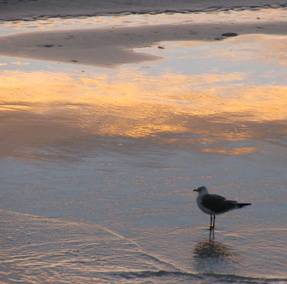 Clearwater Beach sunrise.   #clearwaterbeach #sunrise