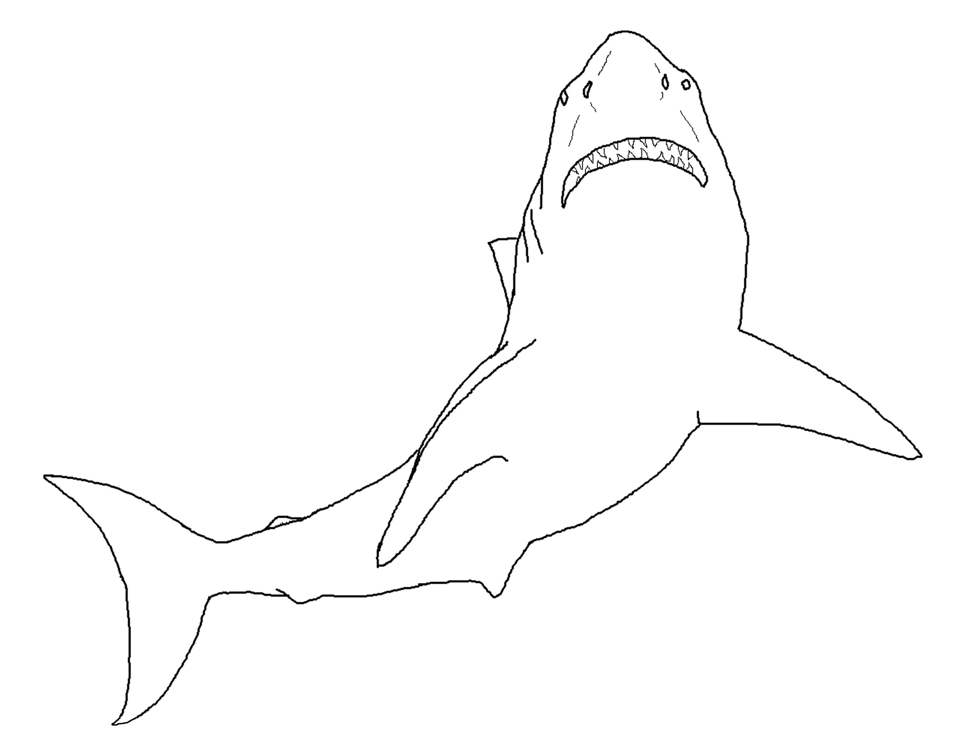 40+ Cartoon great white shark coloring page ideas in 2021