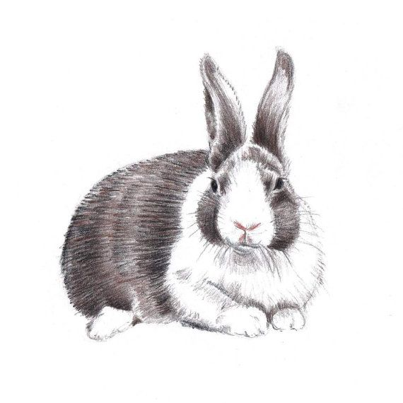 Rabbit Drawing Original Colored Pencil Art Bunny Brown and White