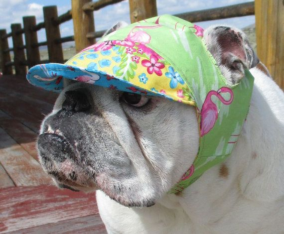 English Bulldog Reversible Hat Funny Dog Hat Tropical Flamingos