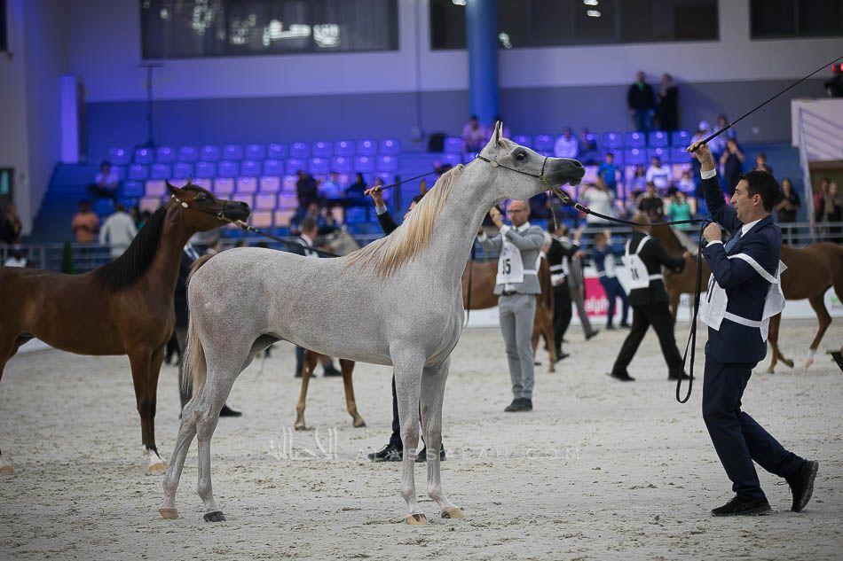 نادي الفروسية ي علن عن حفلة سباقه الـ41 يقيم نادي الفروسية حفلة سباقه الـ41 اليوم الجمعة ضمن فعاليات موسم سباقات الخيل في الرياض ل Horseriding Horses Animals