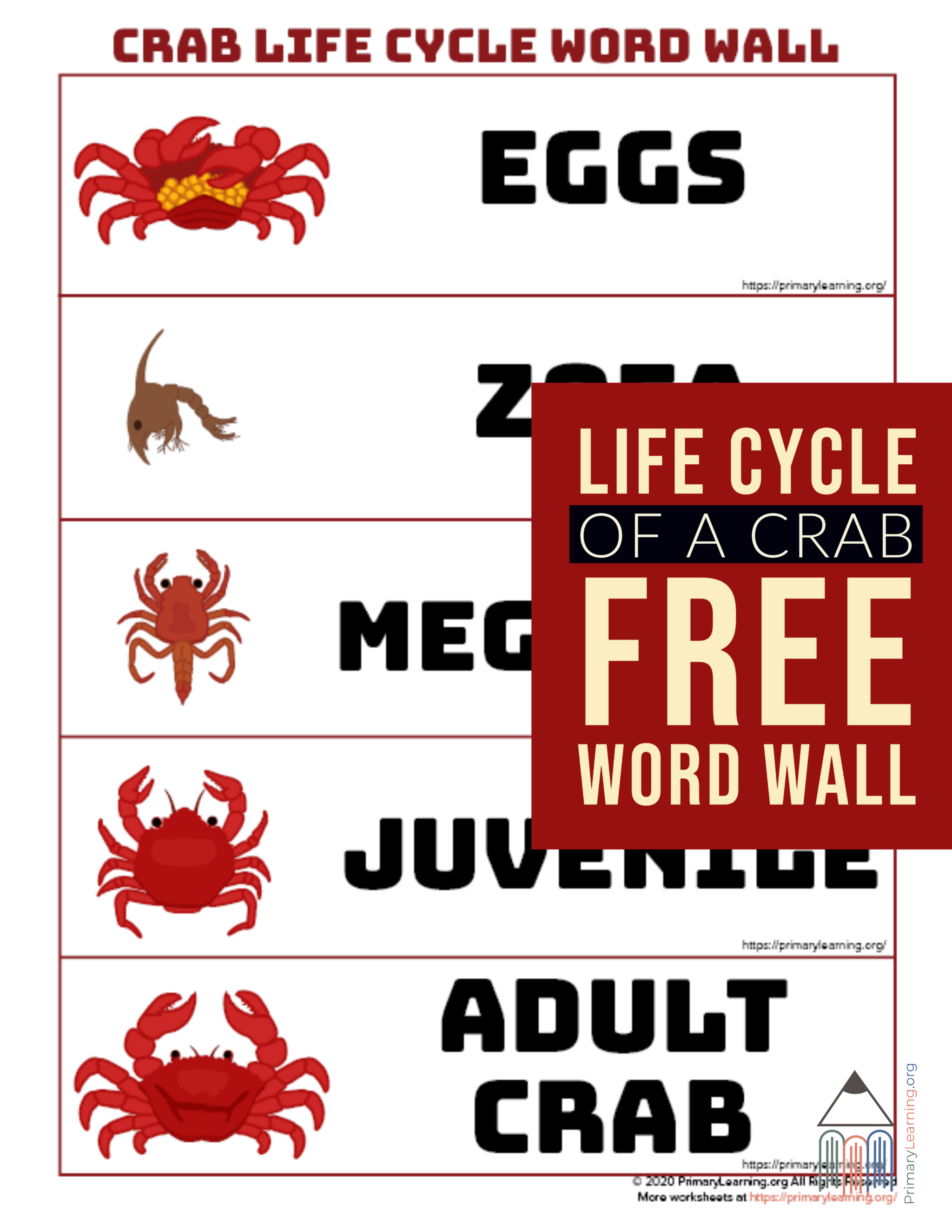 Crab Life Cycle Word Wall In
