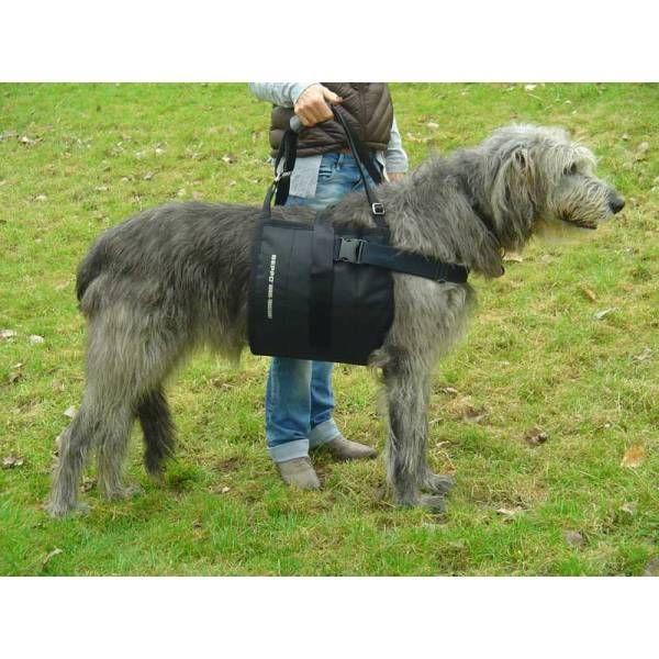 Diy Dog Training Cot