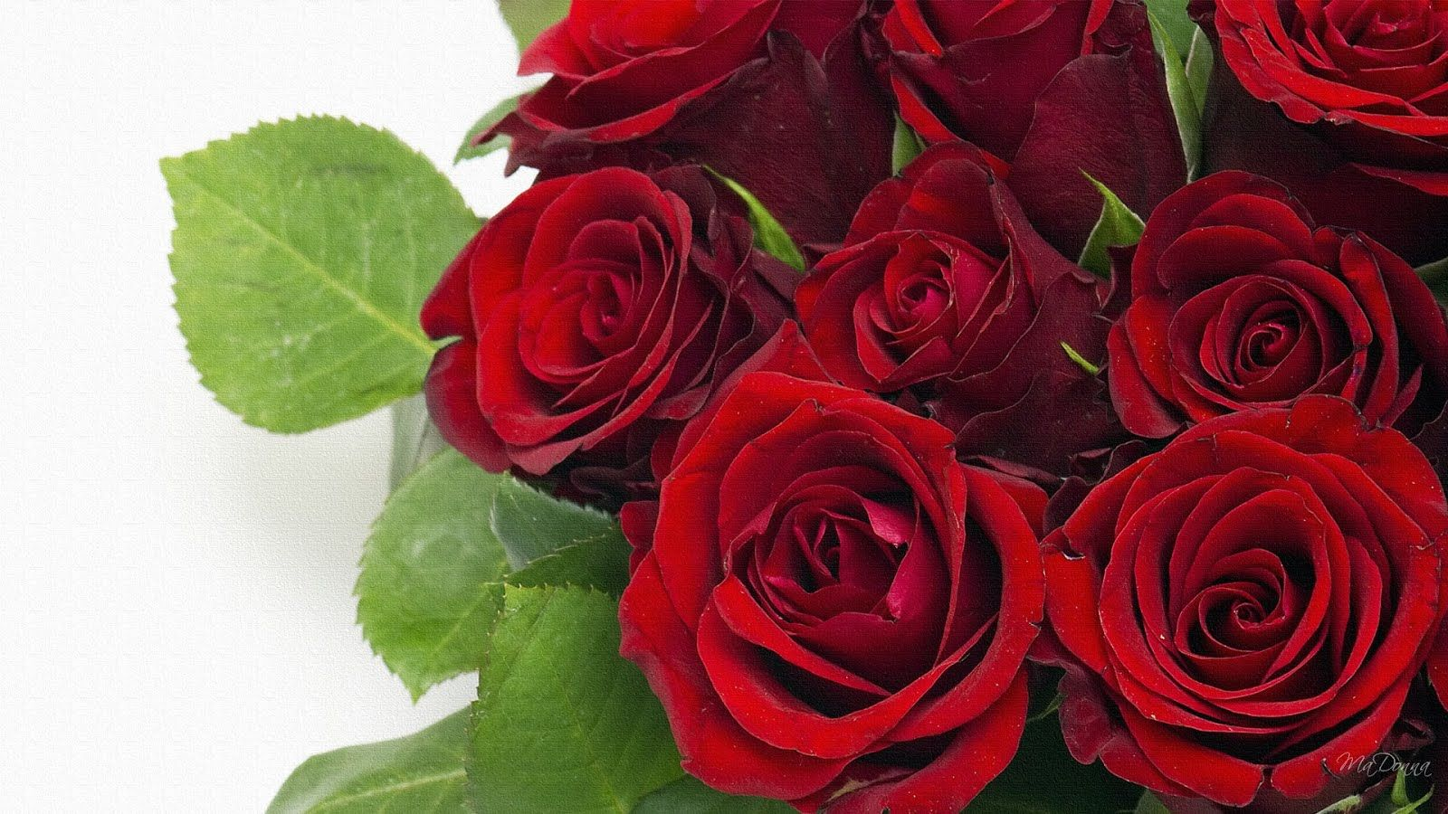 Pin On World S Best Roses