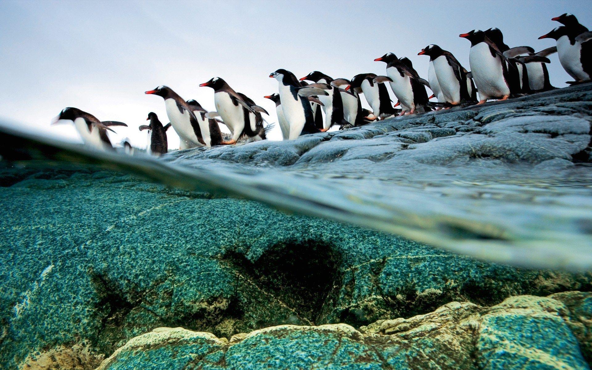Most Beautiful Nat Geo Wild Wallpaper Nature Photographs Penguins National Geographic Photographers