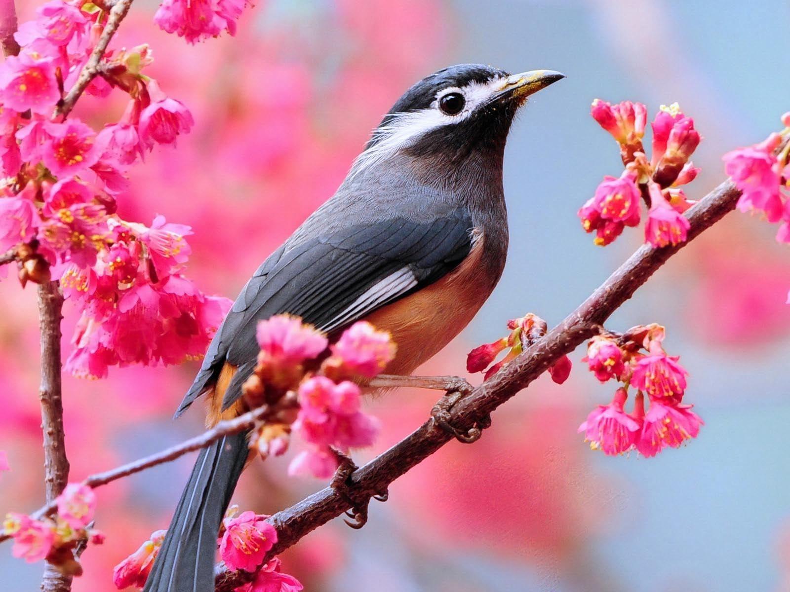 Spring awakening flowers. Abundant of watercolors pop! Pastel dreams and birds in the spring.