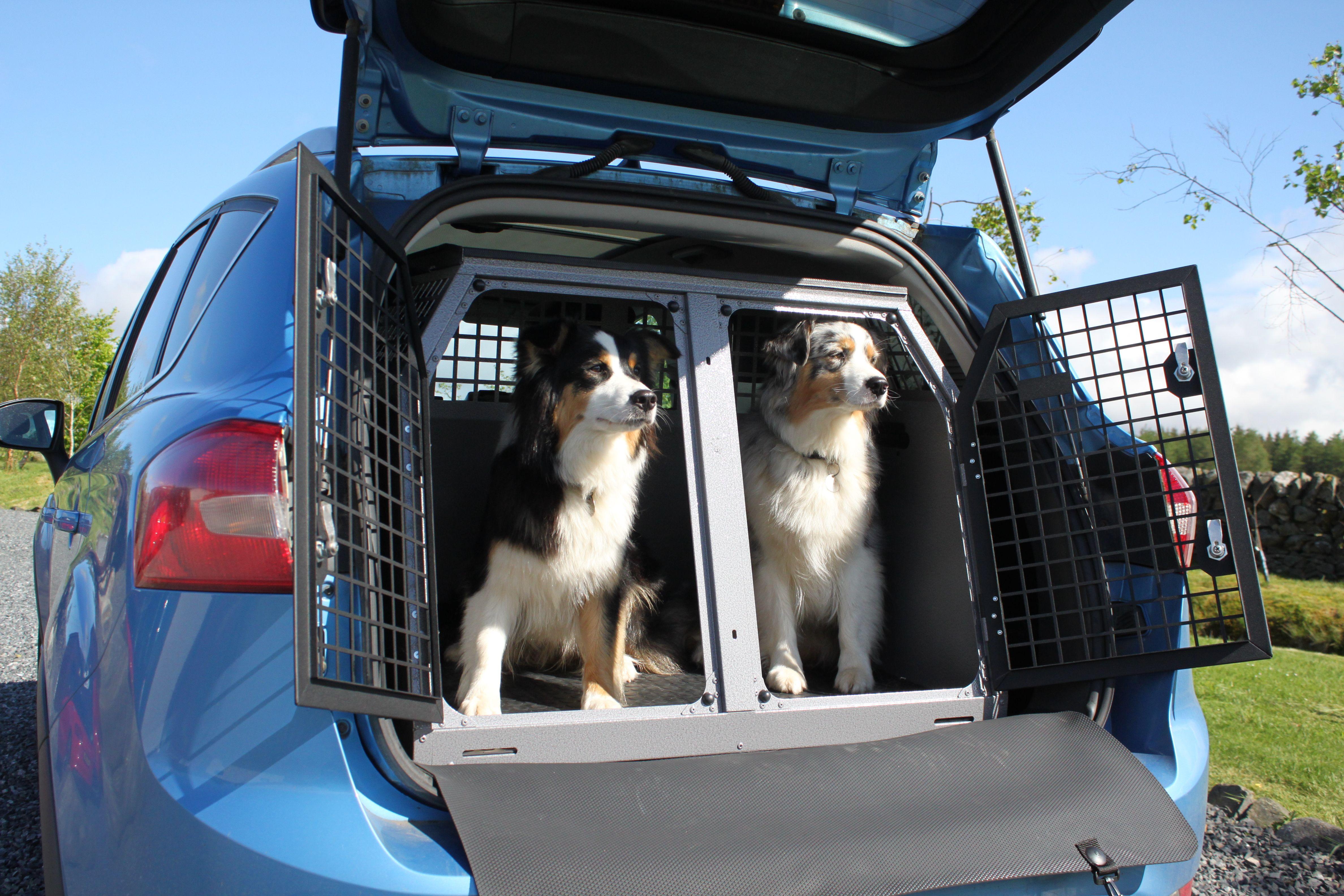 Australian shepherd dogs flurry and roxy in transk9 b21 dog transit box ford