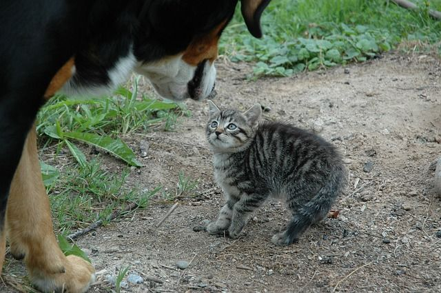 3 Reasons It Is Safer To Keep Your Cat Inside Cats Cats For Sale Outdoor Cats