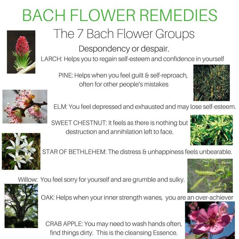 Despondency And Despair Bach Flower Remedies Flower Remedy Bach Remedy