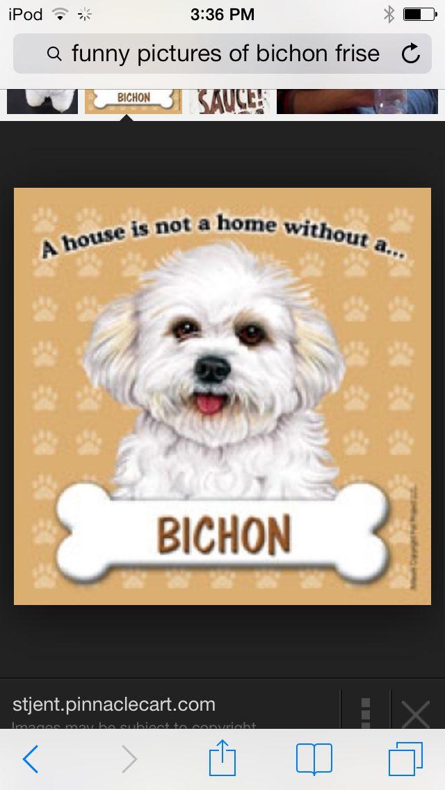 Aww I love bichion