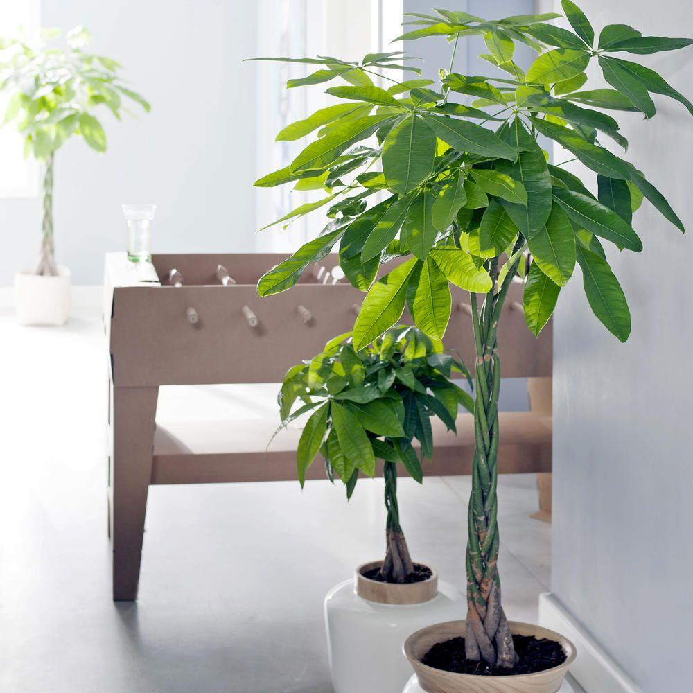 Glücksbringer Pflanzen