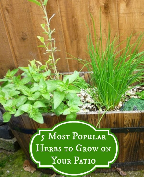 5 most popular herbs to grow on your patio herbs. Black Bedroom Furniture Sets. Home Design Ideas