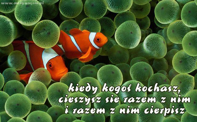 Kiedy kogoś kochasz…   www.MotywujSie.pl