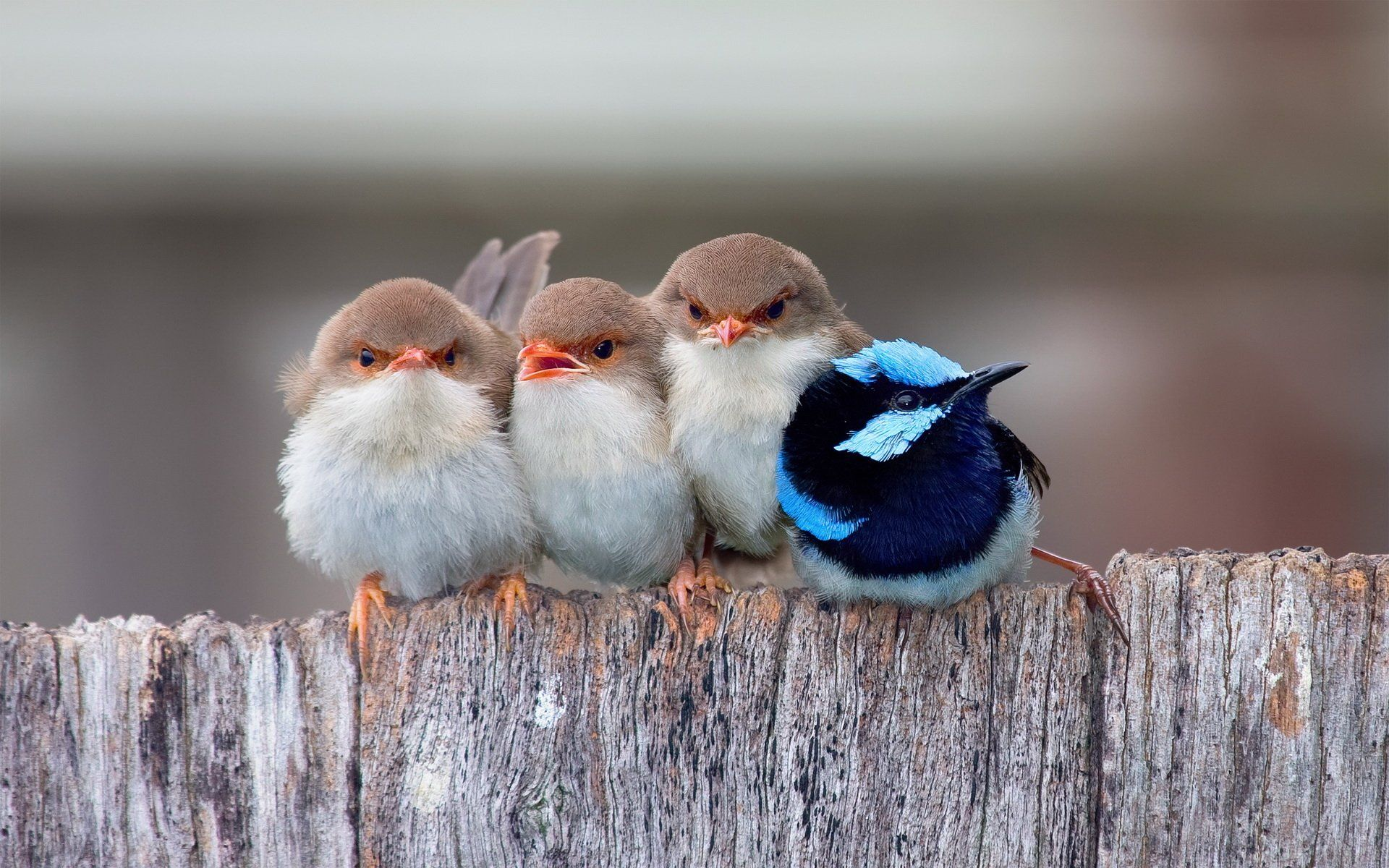 Bird Computer Wallpapers Desktop Backgrounds 1920x1200 Id 556063 Funny Birds Little Birds Cute Birds