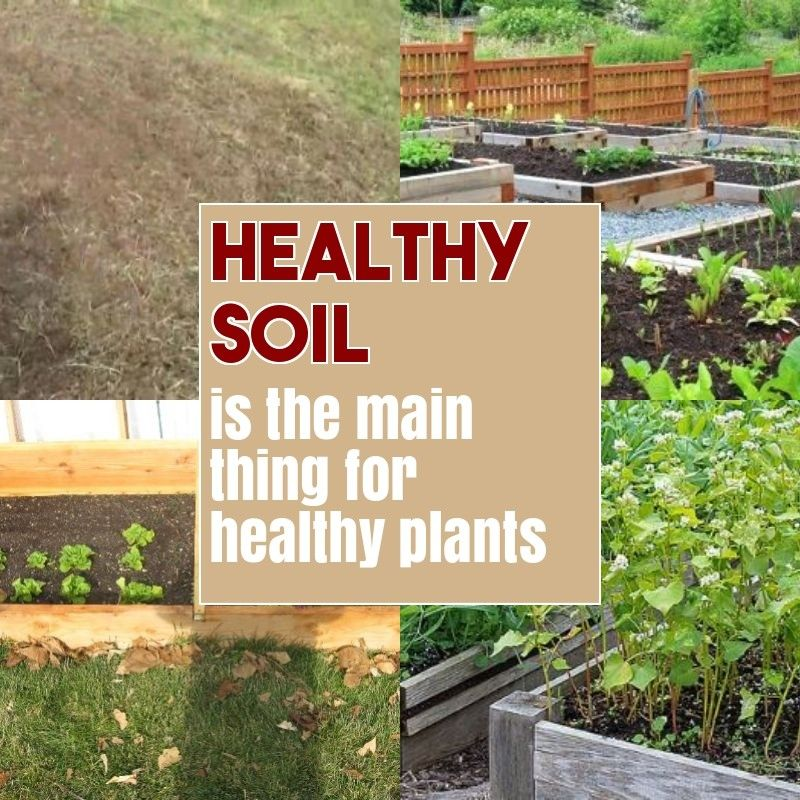 09d0257fe08e9d39eee605fcc553d885 - How To Prepare Soil For Next Year Gardening