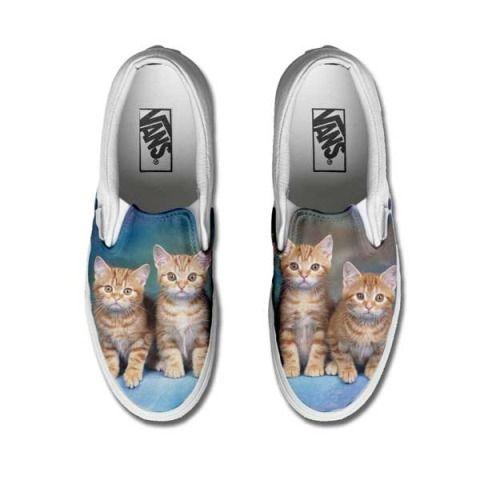vans gatti