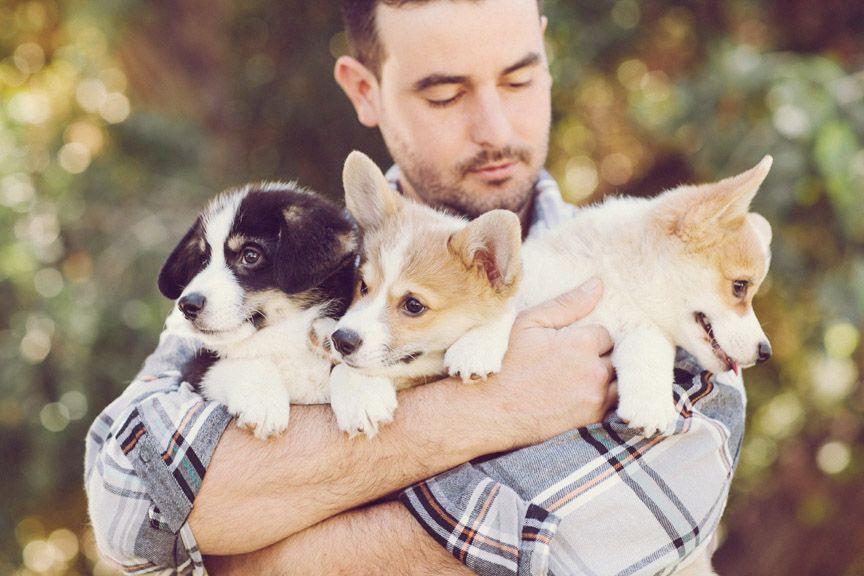 Anniversary session with adorable corgi puppies!  http://jenfujphotography.com/a-corgi-puppy-anniversary-shoot/