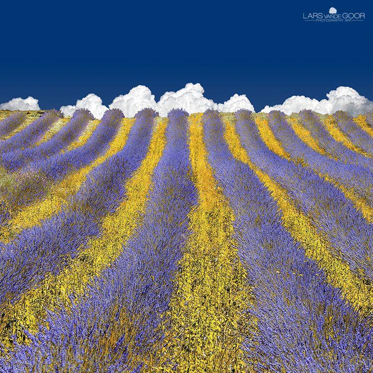 Lavender Heaven|provence