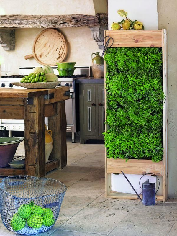 Small living wall in the kitchen