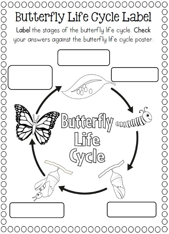 Life Cycles Life Cycles Kindergarten Science Butterfly Life Cycle