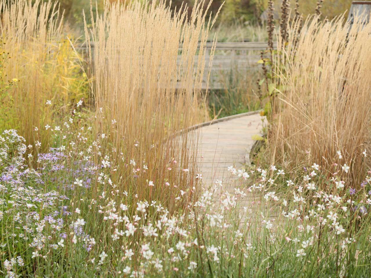 London Wetland Centre Rain nigel dunnett - Google Search ...