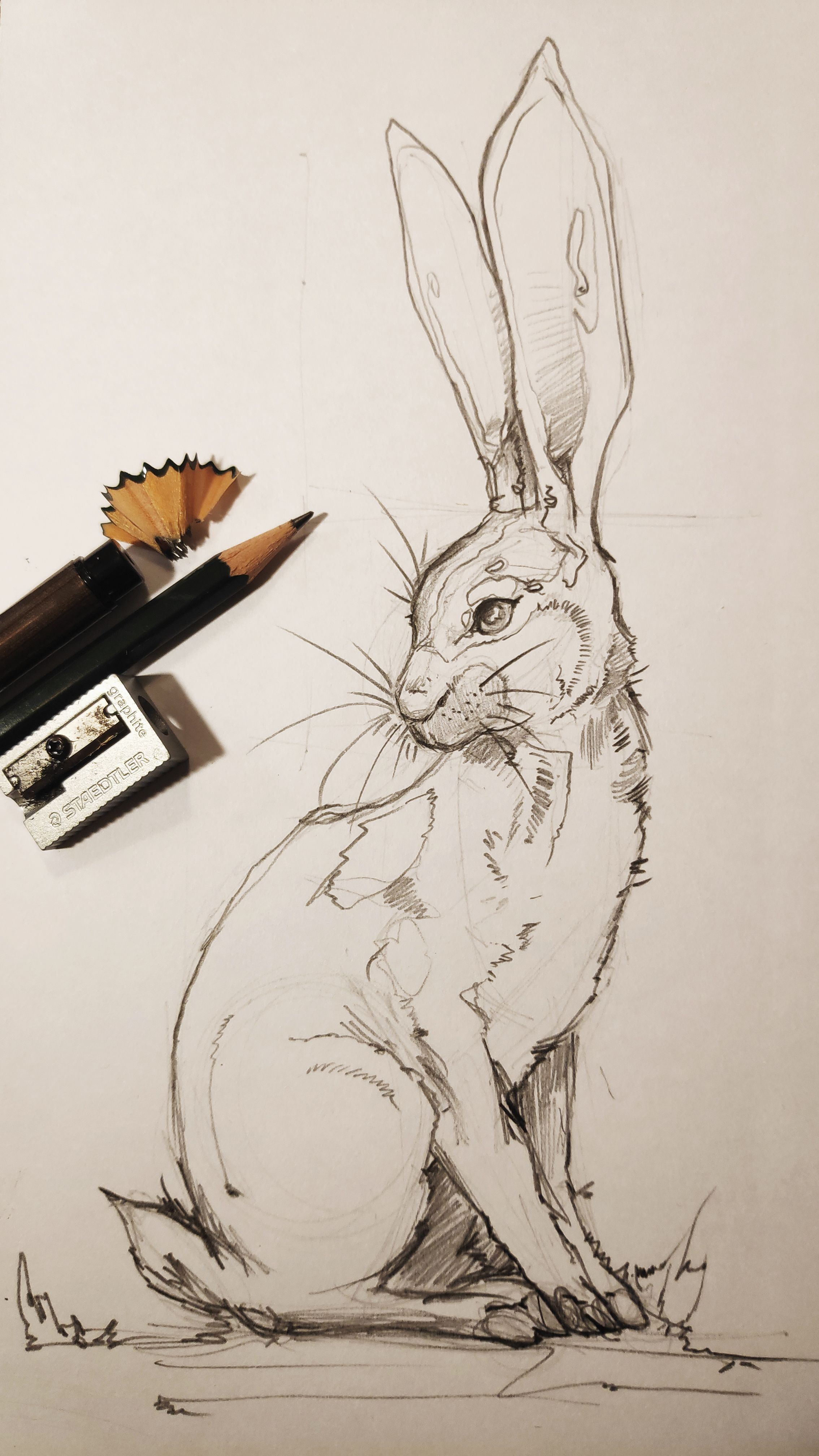 How to draw EASTER BUNNY? Drawing of a pencil drawing rabbit. Anamorphic illusio…