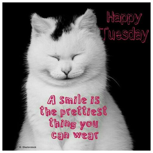 Funny Tuesday Morning Quotes Happy Tuesday |...