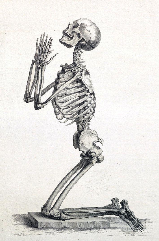 Скелет человека картинки веселые входят всеми