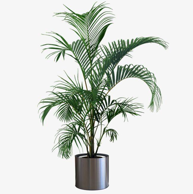 Planta de interior, plantas de maceta, Plantas En Maceta, Verde, Las