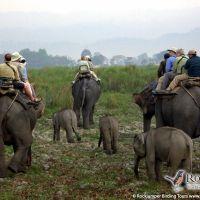 Elephant ride in Kaziranga by Markus Lilje